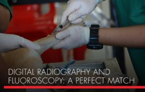 , Digital Radiography and Fluoroscopy: A Perfect Match