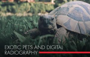 , Exotic Pets and Digital Radiography