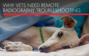 , Why Veterinarians Need Remote Radiography Troubleshooting